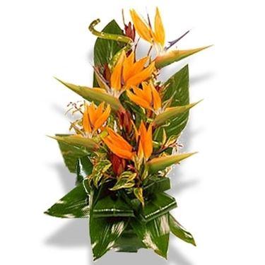 fiori onomastico-9