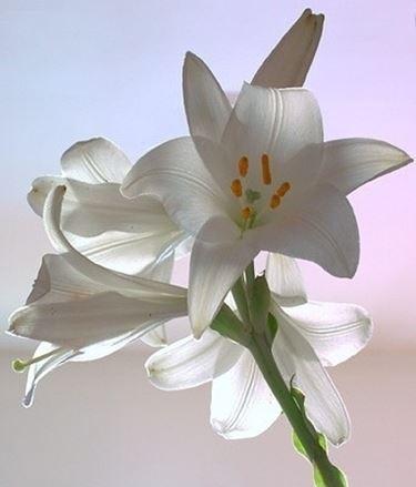 fiori per il battesimo-4