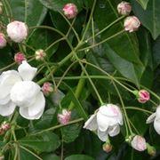 fiori per la convalescenza-2