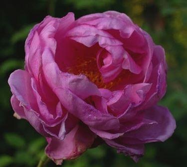 fiori per la convalescenza-9