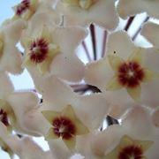 bouquet di fiori-17
