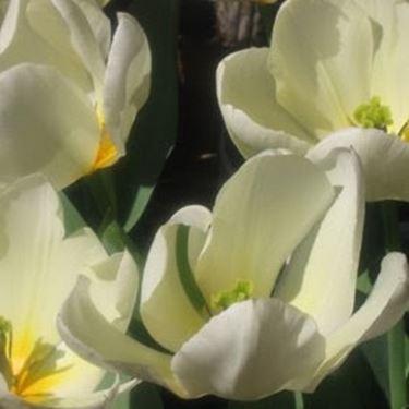 fiori battesimo-3