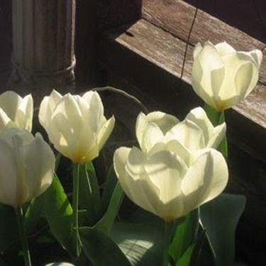 fiori battesimo-9
