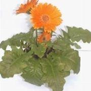 fiori convalescenza-1