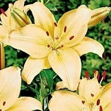 fiori convalescenza-2