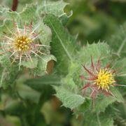 fiori convalescenza-7