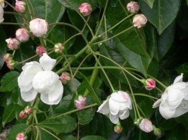 fiori convalescenza