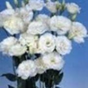 fiori cresima-1