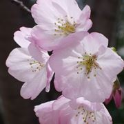 fiori cresima-5