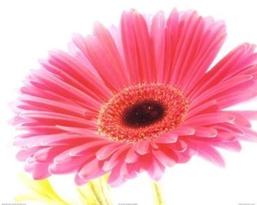 fiori diploma-6