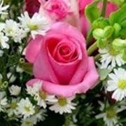 fiori diploma