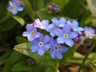 fiori festa dei nonni-1