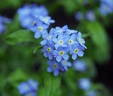 fiori festa dei nonni-3