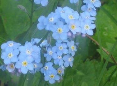 fiori festa dei nonni-6