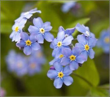 fiori festa dei nonni-7