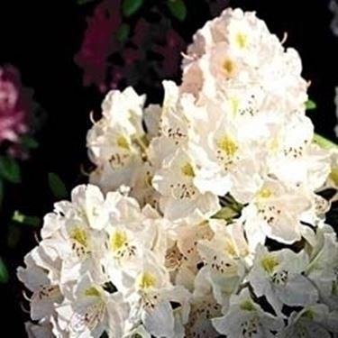 fiori festa del papà-7