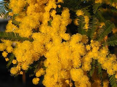 fiori festa della donna-4