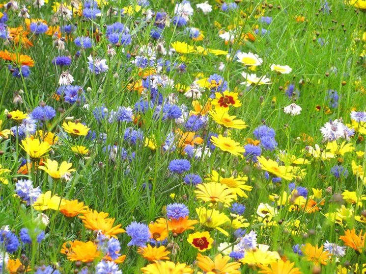 fiori festa della mamma-5