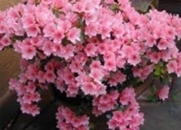 fiori festa della mamma-9