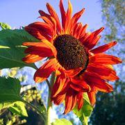 fiori funerale-2