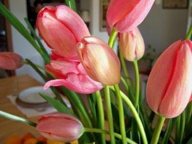 fiori laurea-8