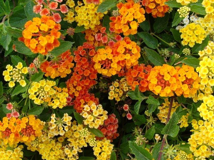 fiori on line-5