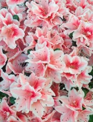 fiori on line-7