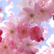 fiori on line-8