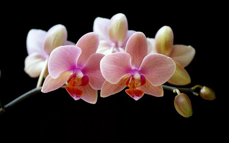 fiori on line-9