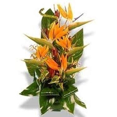 fiori onomastico-1