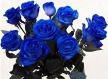 fiori onomastico-2