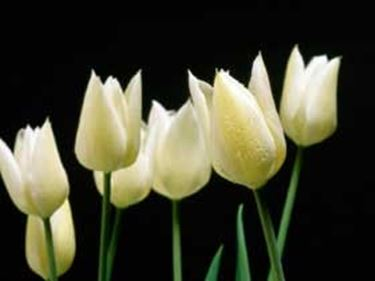 fiori onomastico-6