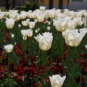 fiori onomastico-7