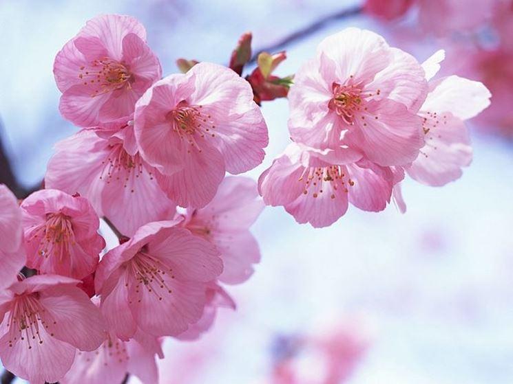 fiori ringraziamenti-5