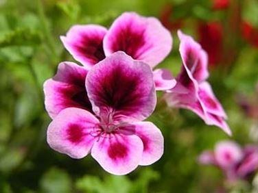 inviare fiori-3