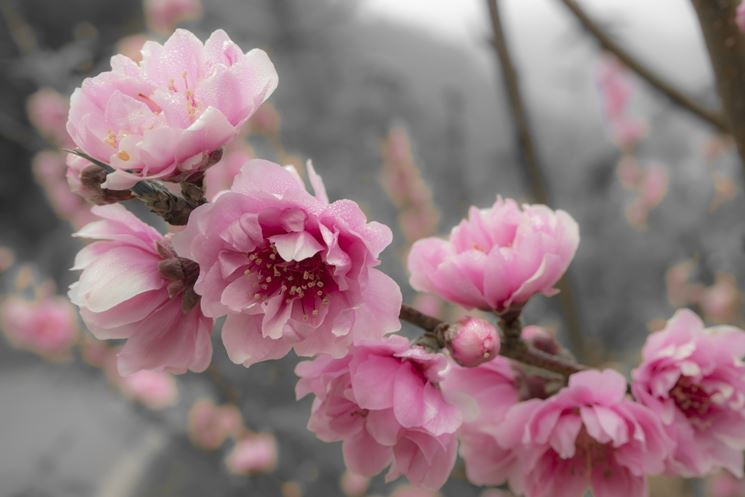 inviare fiori-6