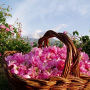 mazzo di rose-14