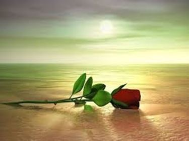 mazzo di rose-1