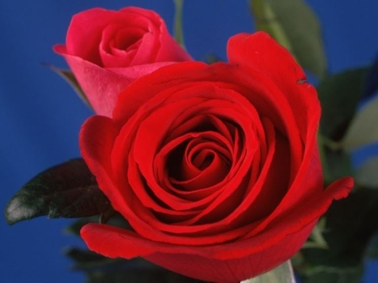 Mazzo Di Fiori Magico.Mazzo Di Rose 3 Regalare Fiori Mazzo Di Rose 3