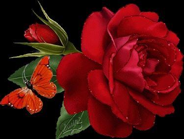 mazzo di rose-5