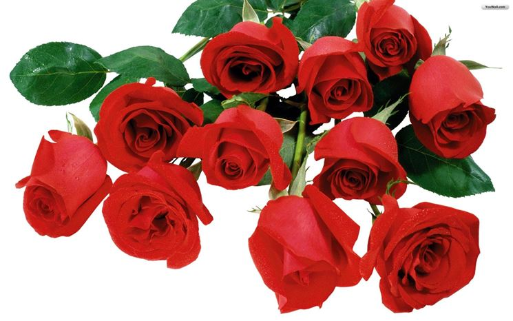 mazzo di rose-7