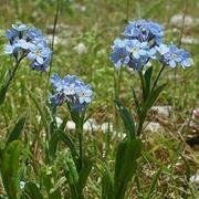Etimologia e linguaggio dei fiori