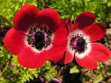fiori amore-4