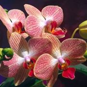 fiori amore-6