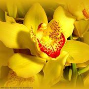 fiori amore-8