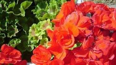 I fiori: bellezza ed espressione dell'amore divino