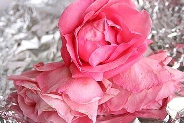 significato delle rose-6