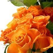 significato delle rose arancioni