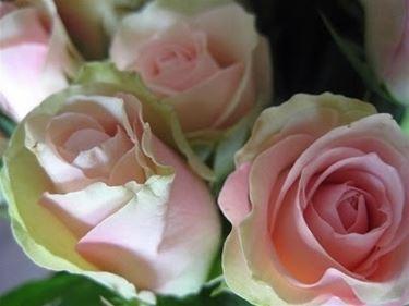significato delle rose