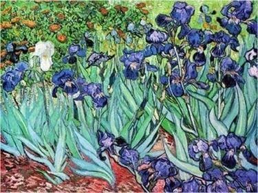 significato dell'iris-9